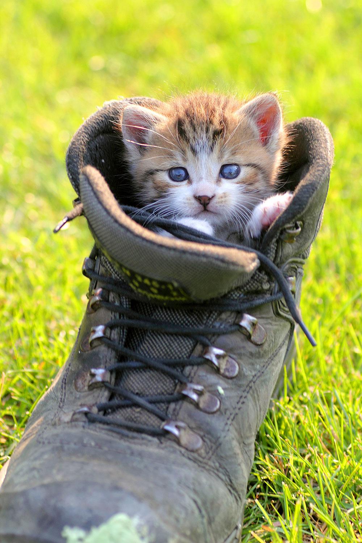 Katze kuschelt in Stiefel