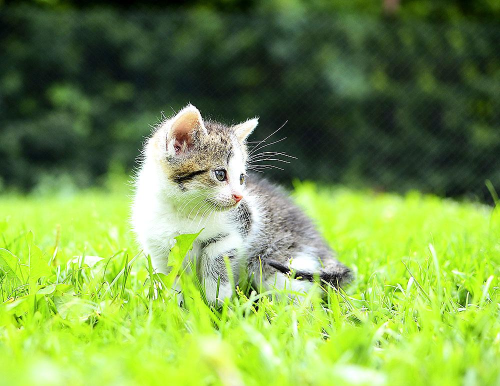 Katze auf der Wiese
