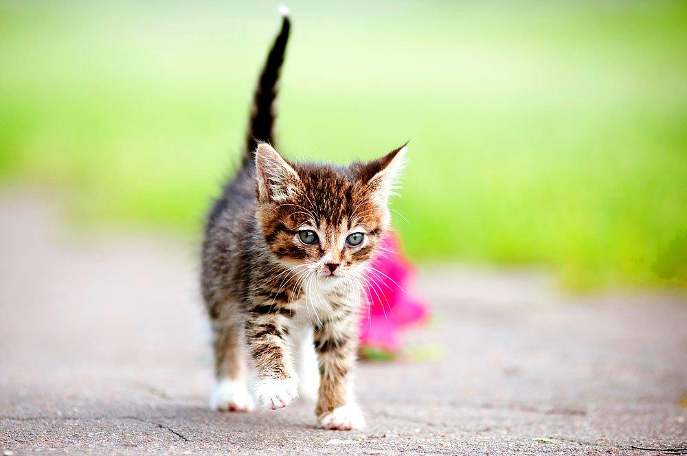 Süße Katze im Garten