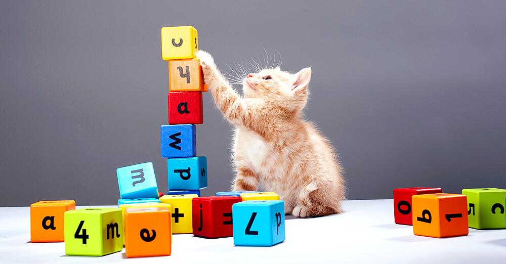 Halten uns Katzen für dumm?